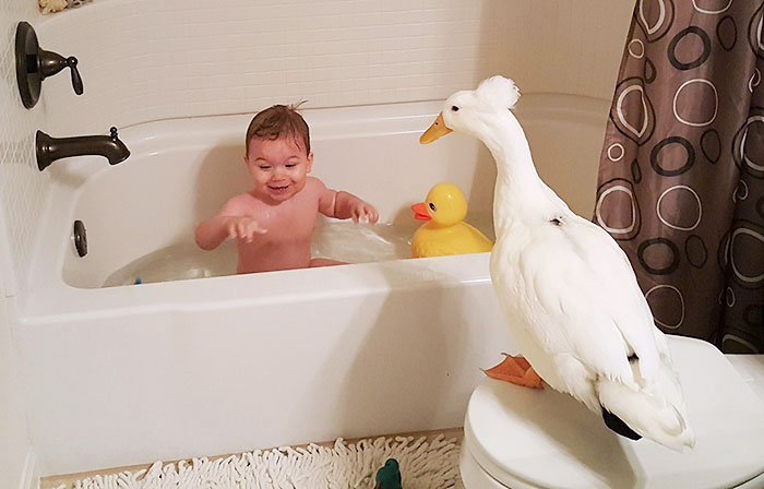 Duck Becomes This Little Boy's Protector, Following Him Everywhere