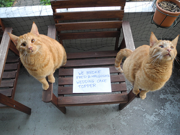These Cats Deserve A Public Shaming