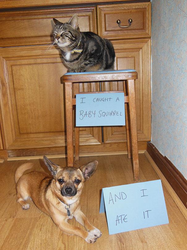 This Pet Shaming
