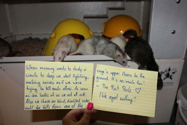 Rat Shaming Isn't Easy