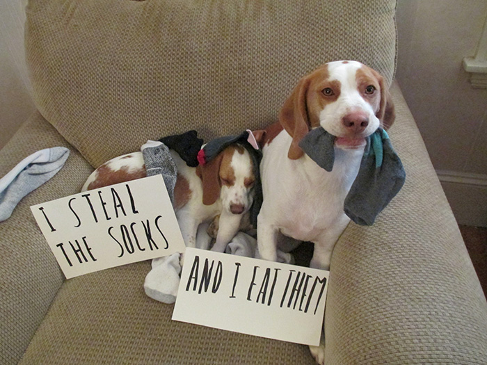 65 Cutest Pet Criminal Duos