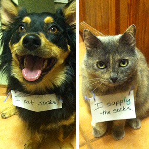 20+ Cutest Pet Criminal Duos