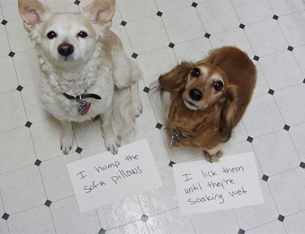 Shameful Dogs