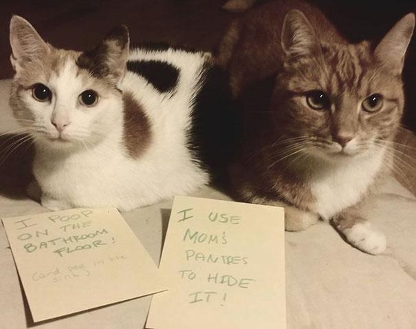 Cats Shaming