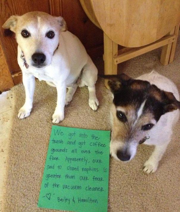 Bailey & Hamilton's Dog Shaming