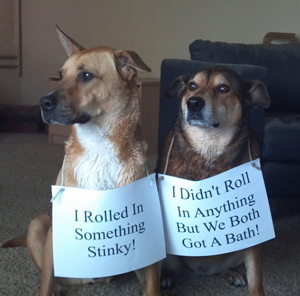 Smelly Dogs