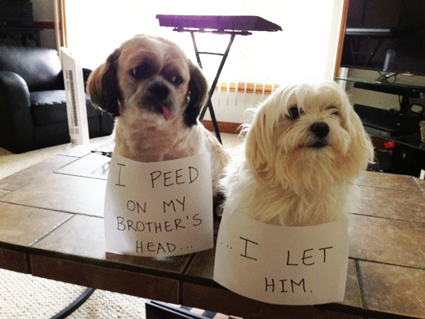 Is Dog-Shaming Still A Thing? Because Their Asses Deserve This