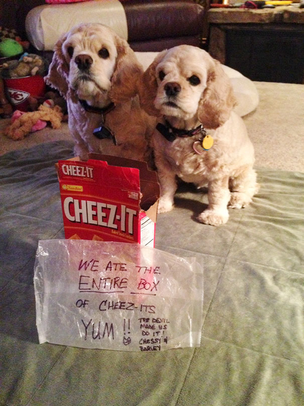 Barley & Chessy Ate An Entire Box Of Cheez-Its With Little Damage To The Box Or Wrapper