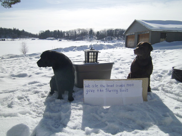 -30 Below Zero I Felt Sorry For The Birds, While I Checked The Wood Stove The Dogs Ate The Crumbs