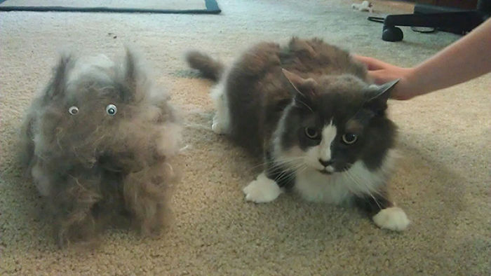 We Brushed A Cat Out Of My Cat