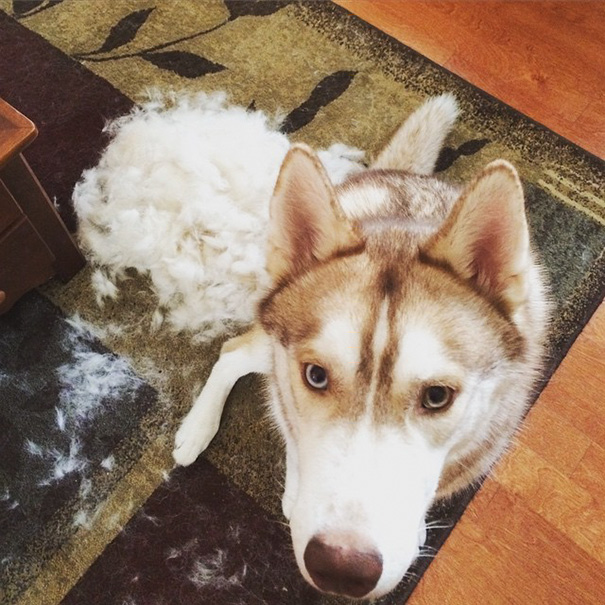 I Brushed My Dog And Made Another Dog
