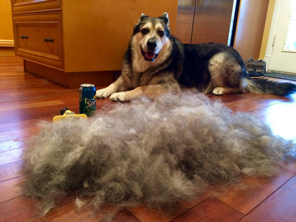 Finally Found My Dog Brush And Ended Up With A Second Dog