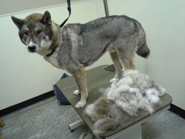 Shedding Season. This Came Out Of Two Legs