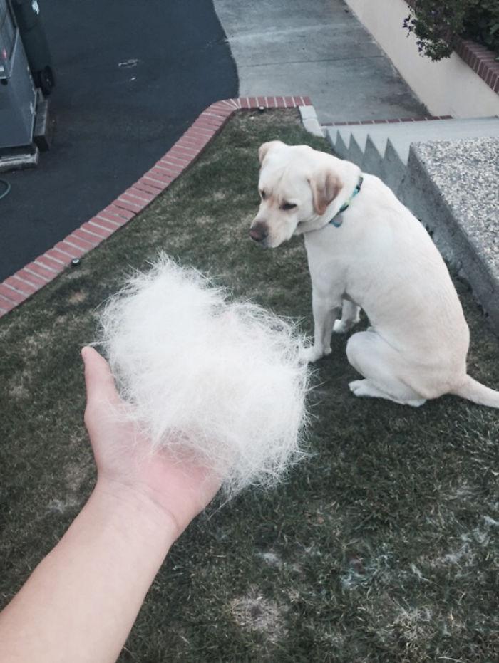 Shedding Fur