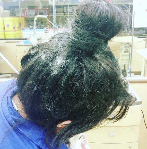 Dog Hair And My Messy Bun