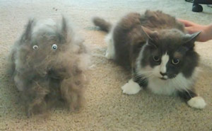 15+ Pics That Perfectly Sum Up Having A Pet