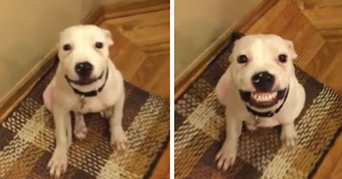Dog Smiles On Command Video