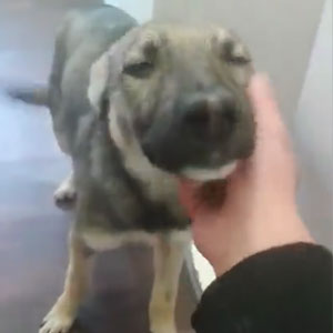 Dog Who Was Terrified Of Human Touch, Now Loves Being Petted