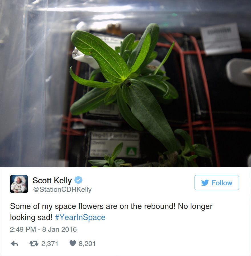 space-first-flower-bloom-nasa-scott-kelly-19
