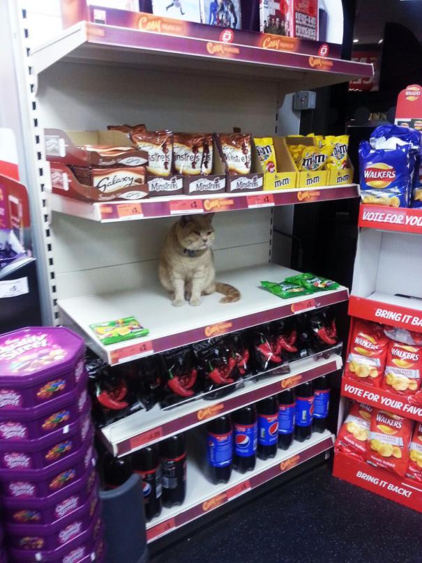 supermarket-sainsburys-cat-olly-oliver-brockley-london-7