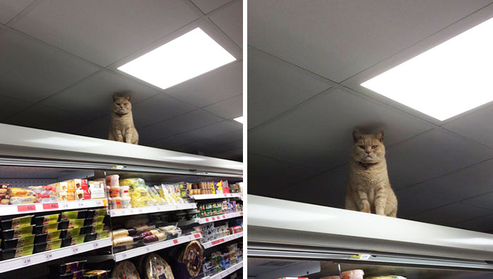 Badass Cat Proves He's The True Owner Of This Supermarket In London