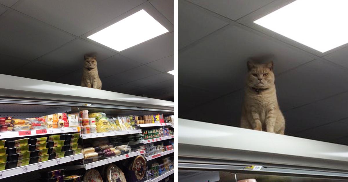 Brockley Sainsbury S Cat