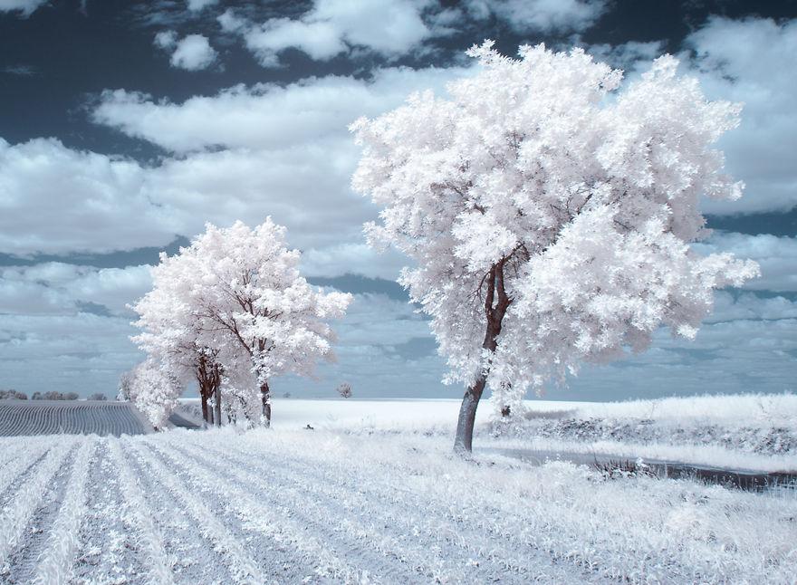 beauty of trees essay