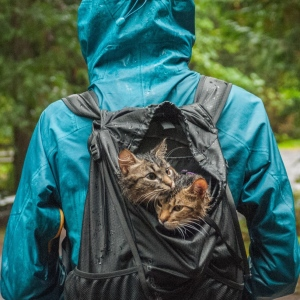 These Two Kittens Were Left To Die, But Now Go On Epic Adventures With Us