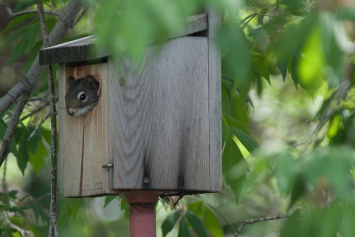 This Little Guy Moved In A Birdhouse