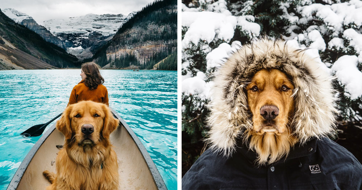 Human Takes His Dog On Epic Adventures, Proves That Dogs Are The Best Travel Buddies