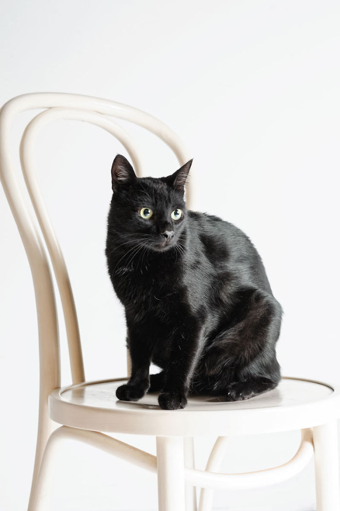 We Photographed A Black Cat, To Tell How Beautiful Black Cats Are. Many People Don't Want Them!