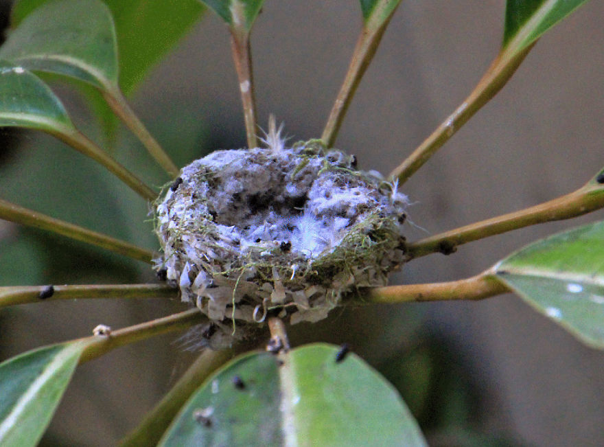 We Watched A Mama Hummingbird Raise Two Babies