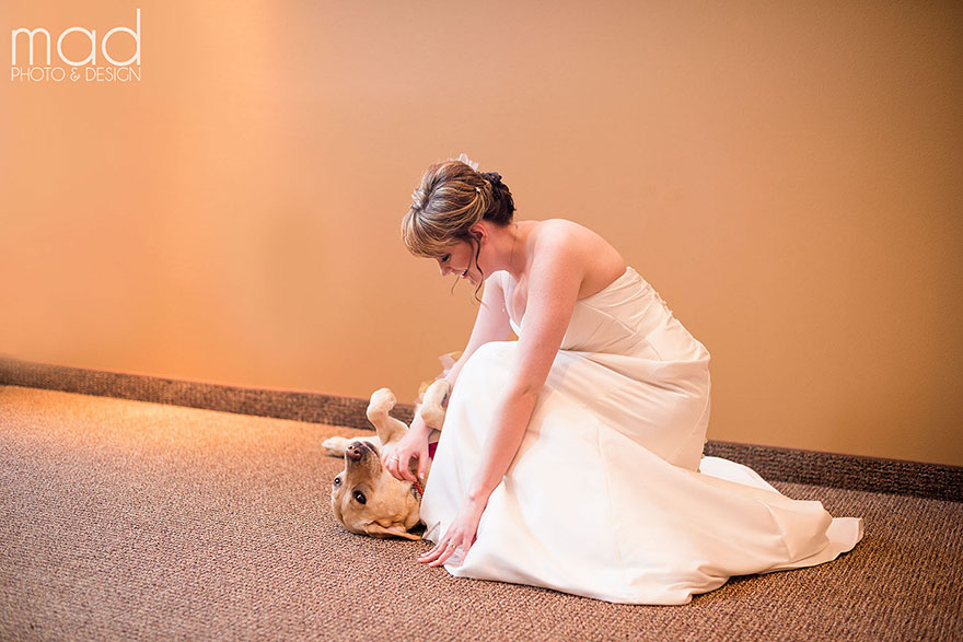 wedding-service-dog-tutu-dress-maddie-peschong-mad-photo-design-2