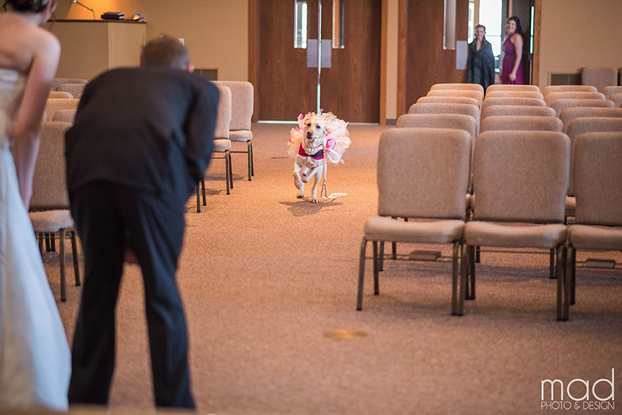 wedding-service-dog-tutu-dress-maddie-peschong-mad-photo-design-4