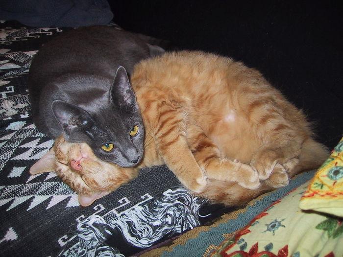 Cozy Cats, Stella And Milo