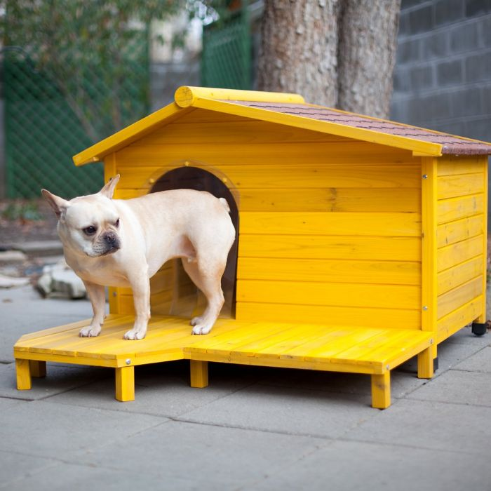 10+ Awesome Dog Houses Your Pet Can Call 'home'