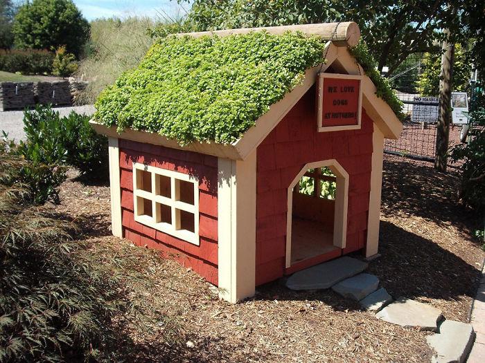 Eco Dog House