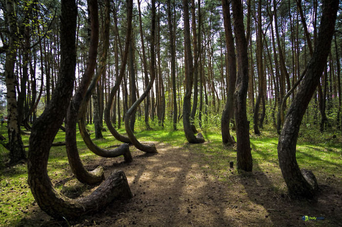 #18 Crooked Forest, Poland