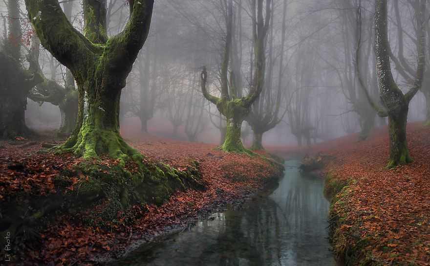 #6 Otzarreta Forest, Basque Country, Spain