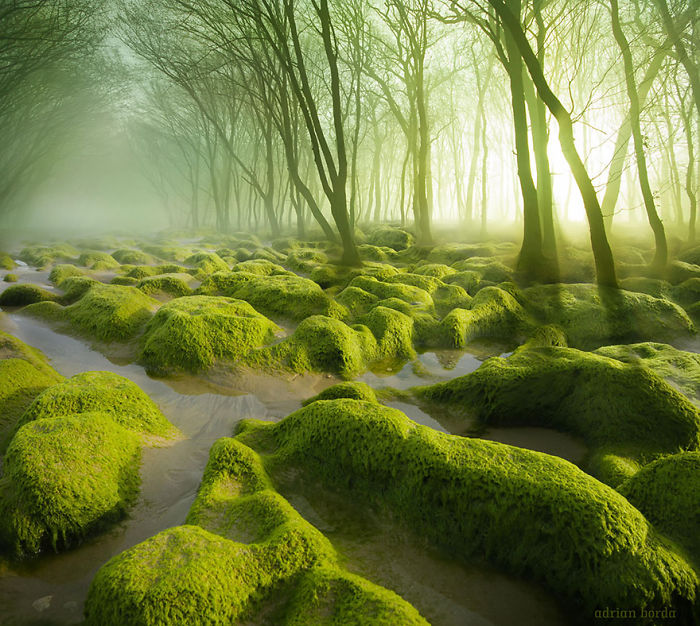 20 Photos Of Mysterious Forests Every True Nature Lover Must See