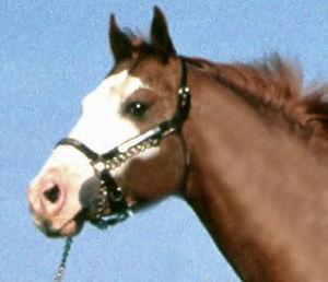 300px-Horse_stub.jpg