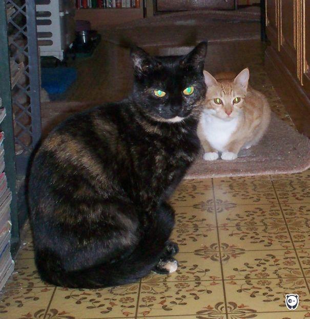 Chin And Asuka