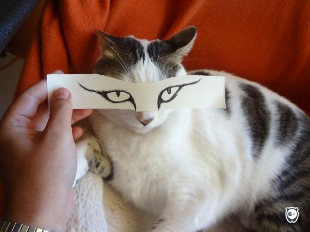 Boredcat :)