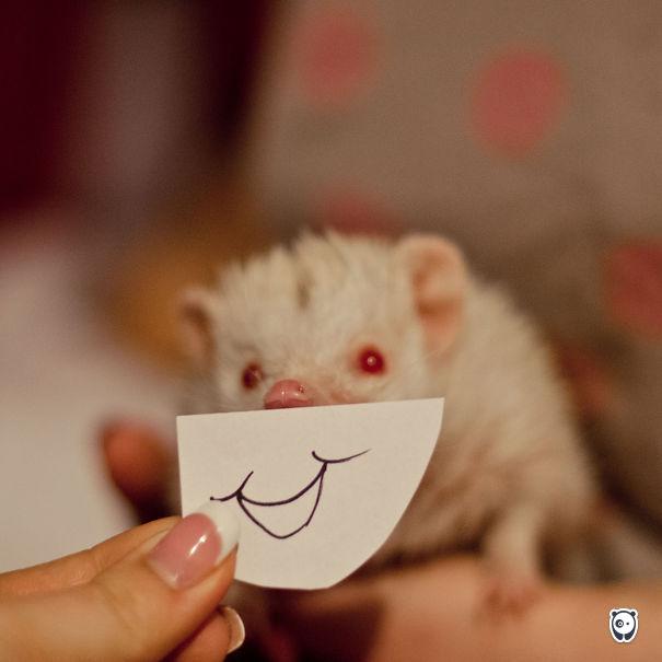 Smiling Hedgie
