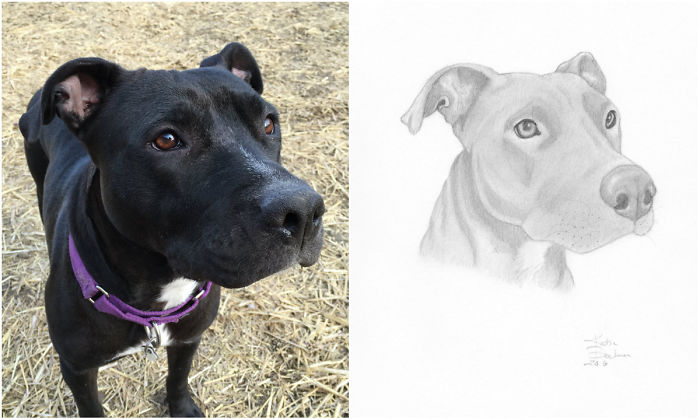 I Draw Portraits Of Pets To Help Save The Lives Of Less Fortunate Animals