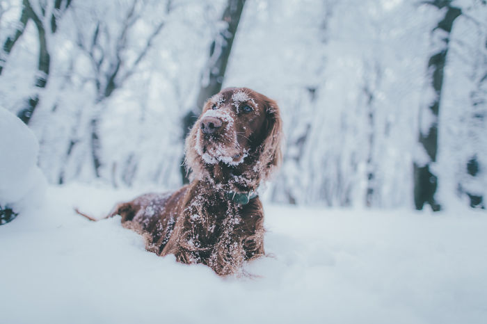 My Lovely Dog Boony Finds Happiness In Every Season
