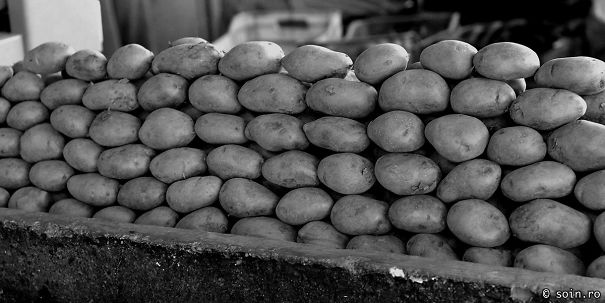 Potatoes In Local Market / Romania - Bucharest