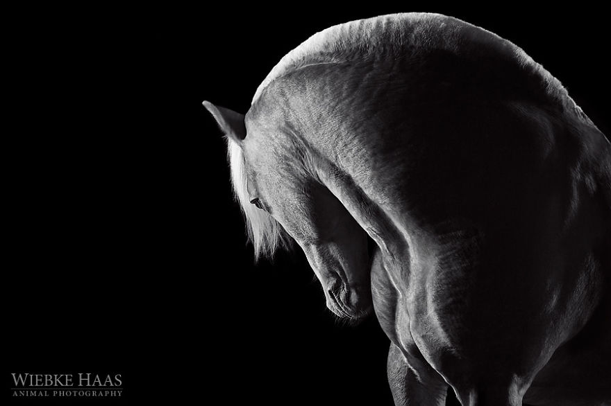 Instead Of Getting A Boring Office Job, I Followed My Dream To Become A Horse Photographer | Bored Panda