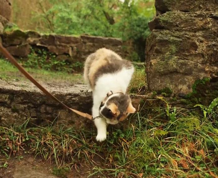 asian cat name