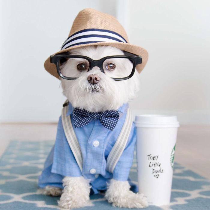 Meet Toby Littledude – Instagram's Most Adorable Hipster Pup!